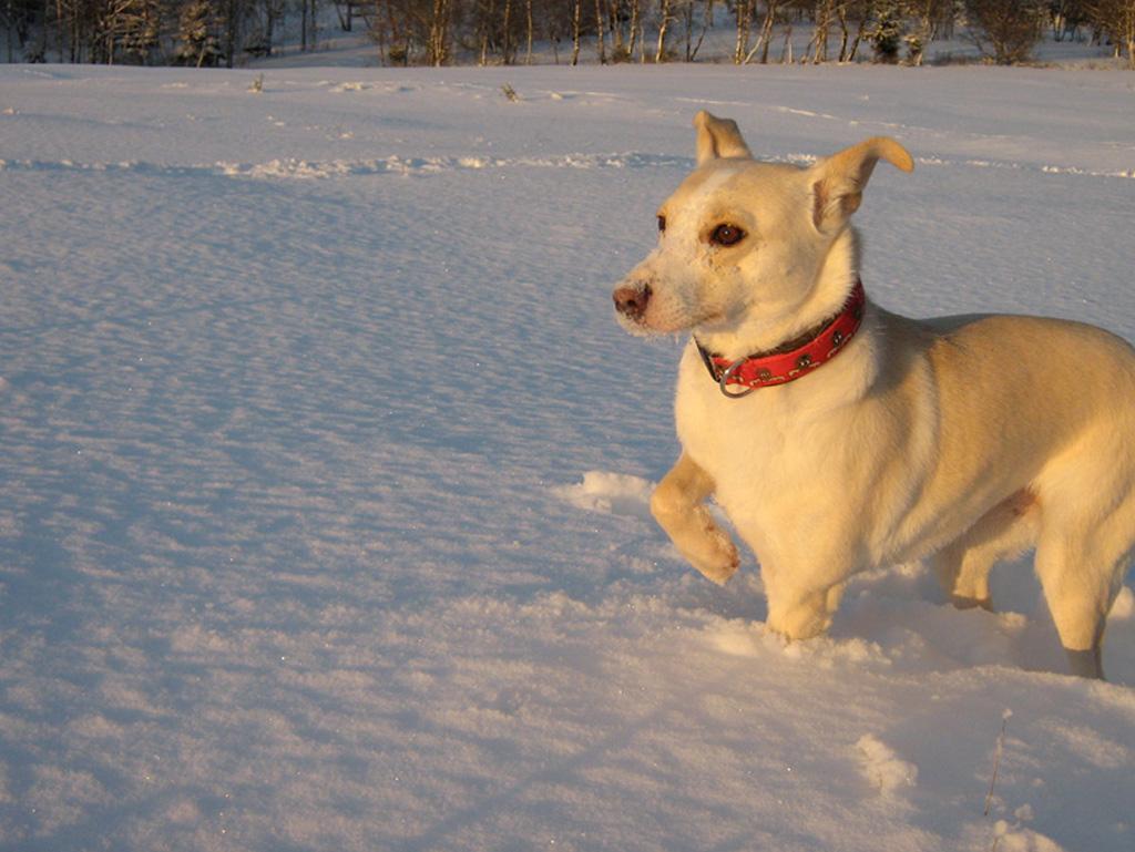 Schuhwerk beste website super günstig im vergleich zu Rudel-Hund - anti-jagd-training