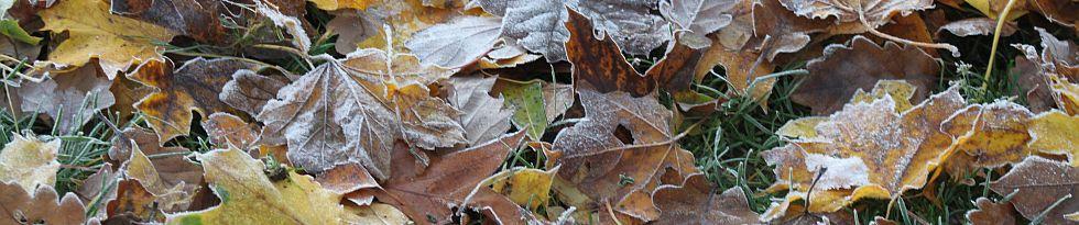 frostige Herbstblätter