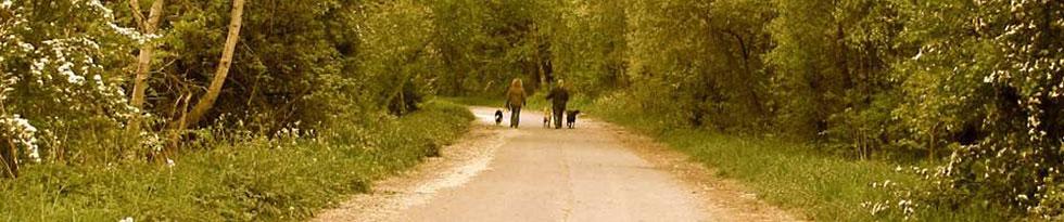 Zwei Frauen gehen mit ihren Hunden auf einem Waldweg spazieren